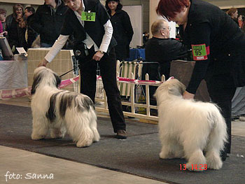 LITHUANIA JUNIOR WINNER - polish lowland sheepdog